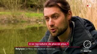 Belgique - Les espèces invasives