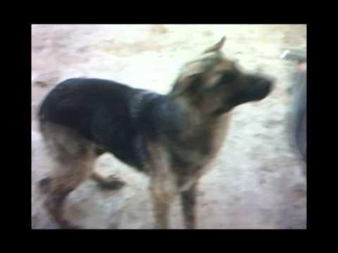 25.2.2012 Hilfe fuer das Tierheim Lucenec