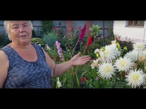 Цветочный оазис Риммы Ивановны на 5 сотках. Огород отступил.