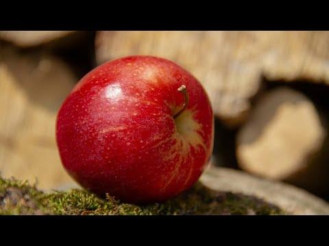 Mulher leva multa de mais de mil reais por carregar maçã na bolsa | SBT Notícias (24/04/18)