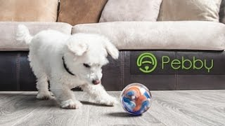 PEBBY : The Most Advanced SMART BALL ! Play Anytime, Anywhere.