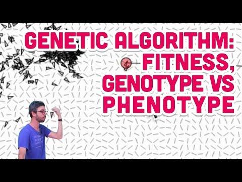 9.5: Genetic Algorithm: Fitness, Genotype vs Phenotype - The Nature of Code