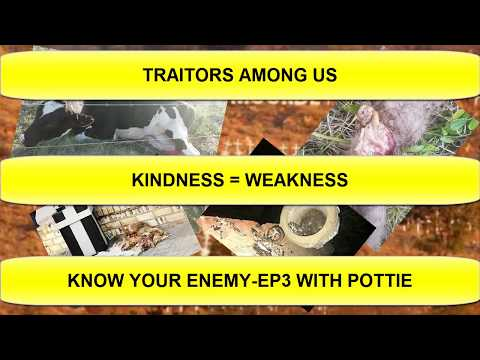 !!afrikaans!!---traitors-among-us---kindness-=-weakness---south-africa