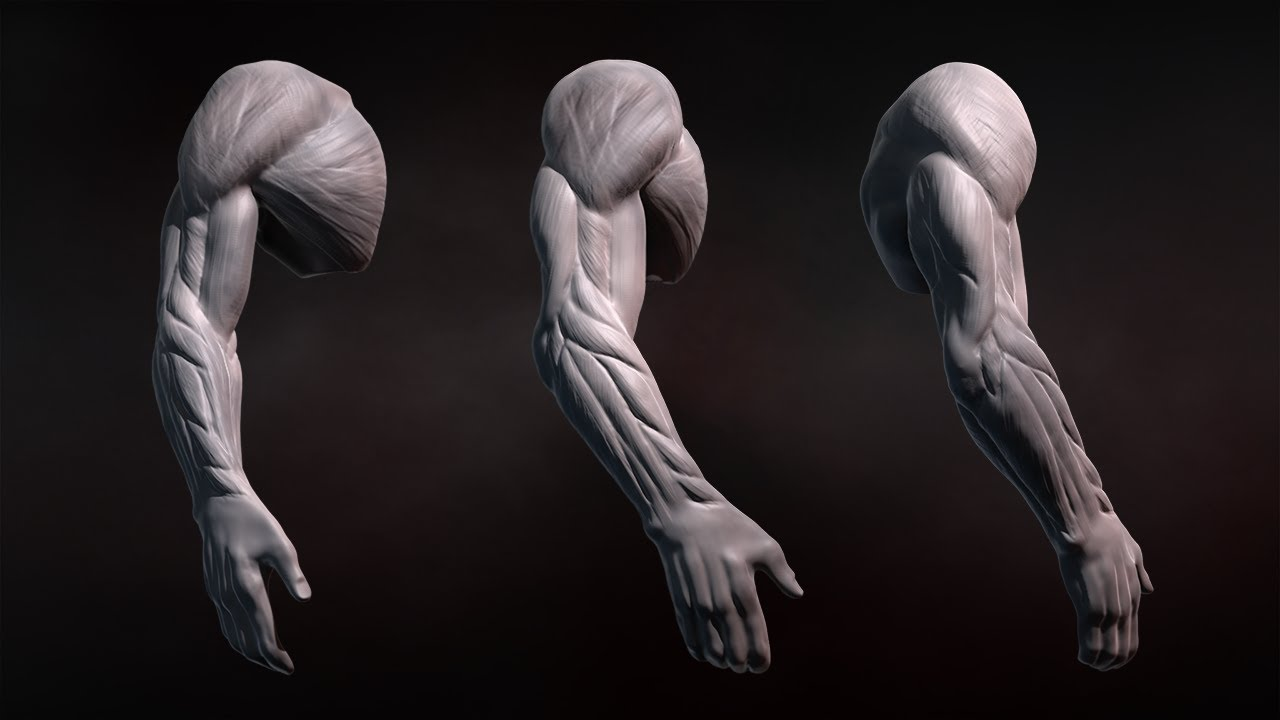 ZBrush Tutorial... Human Arms