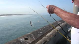 Slivan #284 - Fishing with my dad and some drunk guy on Venice Pier