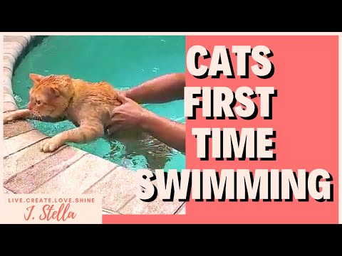 Cats' FIRST TIME SWIMMING | Fast kitty!
