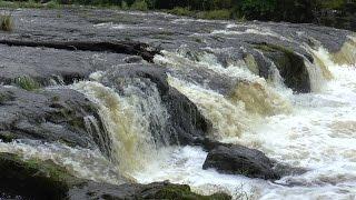 Cenarth Falls, West Wales in Full Flow 25/08/2015
