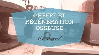 A la loupe 🔍 RÉGÉNÉRATION ET GREFFE OSSEUSE