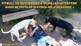 Sahibi Yanında Ansızın Ölünce Köpeklerin Tepkisi Bakın NE OLDU?? - İzleyince Şaşıracaksınız!!!