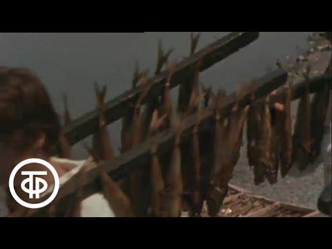 Щедрая анапская земля. И море (1979)