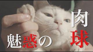 映画とドラマ「猫侍 SEASON2」 ドラマ版4月放送スタート&劇場版今秋全...