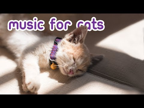 EXTRA-LONG Cat Music - Terapi Feline Anti Kecemasan 15 Jam!