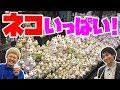 【豪徳寺】 招き猫がいっぱいのお寺! の動画、YouTube動画。