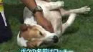 ハワイ、オアフ島ノースショアのロコ犬が家族を紹介します。 http://www...