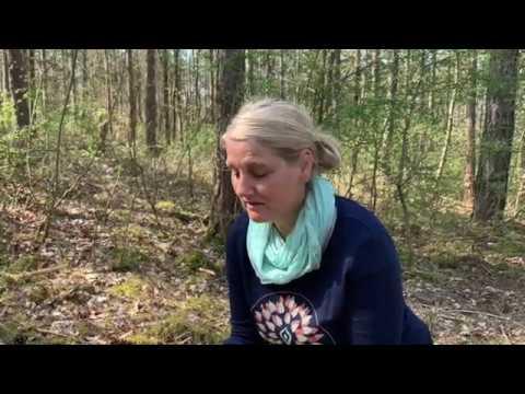 Waldbaden ❤🌳 Inspirationen