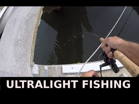 Catching Fiddler Crabs Fishing For Sheepshead Mangrove Snapper With Shrimp