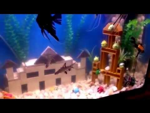 Angry Birds Aquarium Decoration