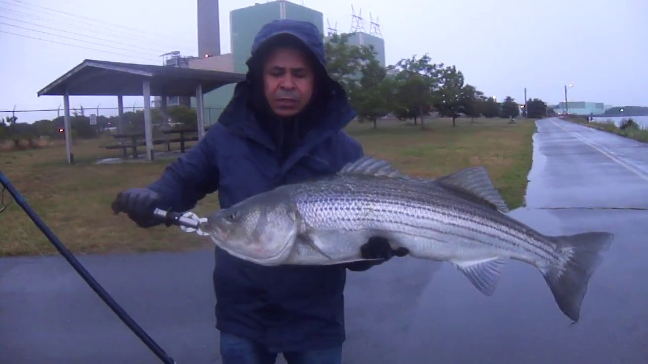 40 39 39 inches cape cod canal fishing 2017 youtube for Cape cod canal fishing report