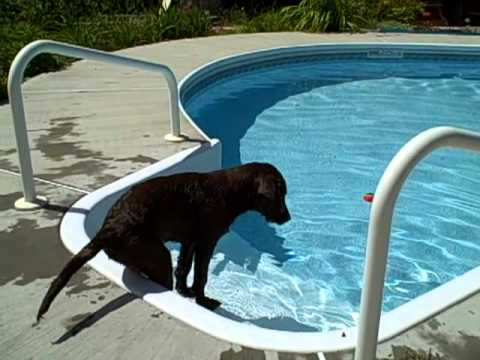 Jasper figures out the swimming pool