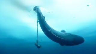 Un Inuit pêche un requin énorme à la ligne ! - ZAPPING NOMADE