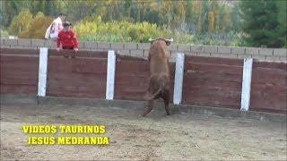 Encierro Muduex 2018 (Domingo)
