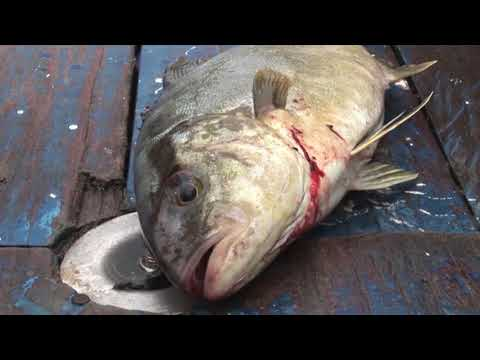 Lose Your Appetite For Fish In 60 Seconds