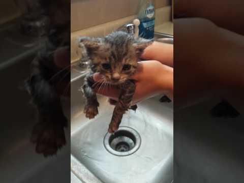 Adorable kitten takes bath!! Tutorial  Must watch!!