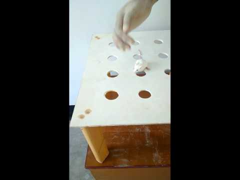 Hole Board Test (HBT) explained with the apparatus