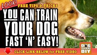 Dog Training Los Angeles | Free Dog Training Tips | Dog Obedience Training Los Angeles, Ca