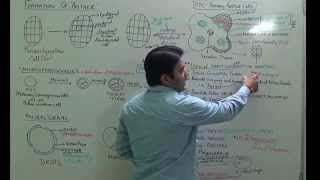 Part:(2).formation of anther and pollen grain