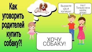 Как уговорить родителей купить собаку/как я уговорила своих/ York Bonya/🐕🐶👨👩👧