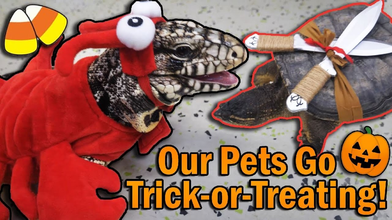 Our Reptiles go Trick-or-Treating in the Zoo!