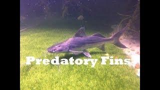 exotic-freshwater-fish