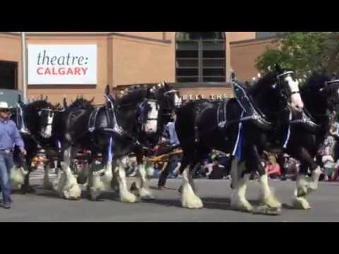 Calgary Stampede Parade 2016 Youtube