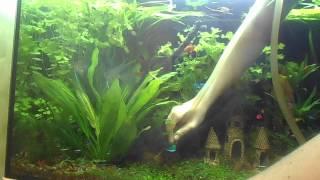 чистка аквариума(, 2014-04-03T04:10:28.000Z)
