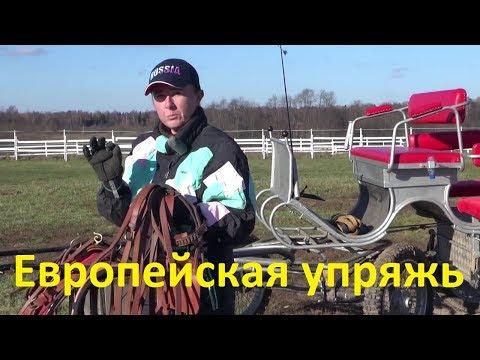 Как называется конный экипаж для перевозки людей