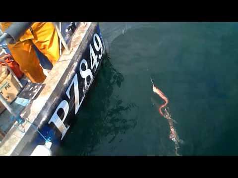 'Rise Of The Ribbon Fish'