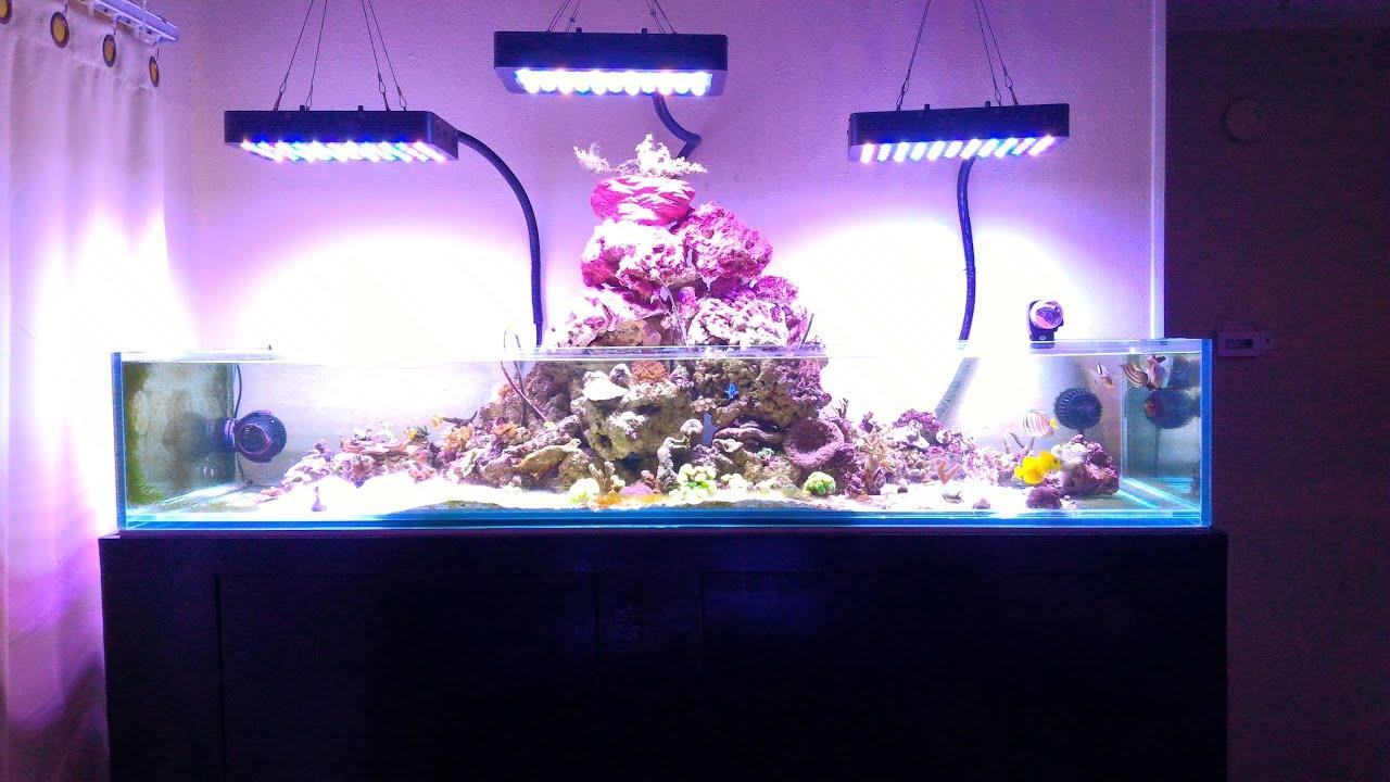 Tony Nguyen Bonsai Island Reef Tank Update Some Equipment Youtube