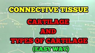 CONNECTIVE TISSUE :- CARTILAGE AND TYPES OF CARTILAGE (EASY WAY)