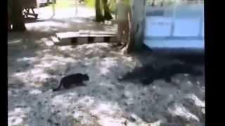 Самые Смешные Кошки 2014  Самое Смешное Видео Про Кошек