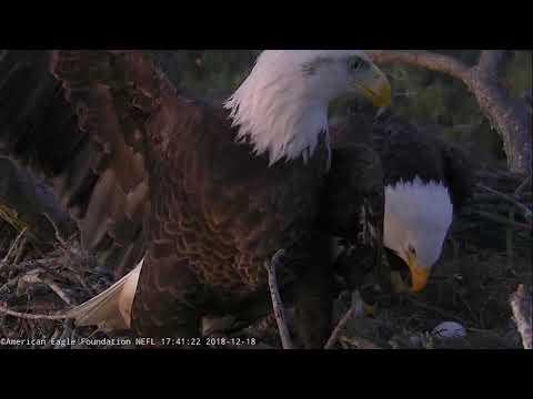 AEF NEFL Eagle Cam 12-18-18: Romeo Defends Nest from Female Eagle Visitor
