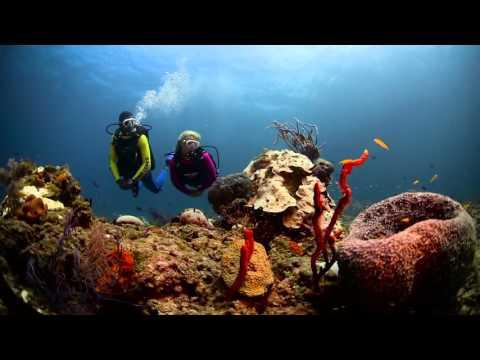 Stuart Coves 2016  Dive Shop & Travel Seller Promo Video
