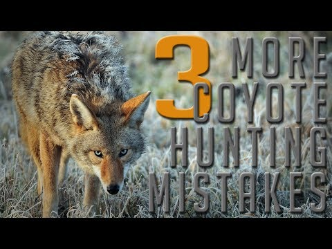 3 More Beginner Coyote Hunting Mistakes | Part Two!
