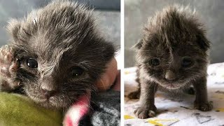 "Woman rescues abandoned kitten with ""bed head"" – say hi to Wolfie!"