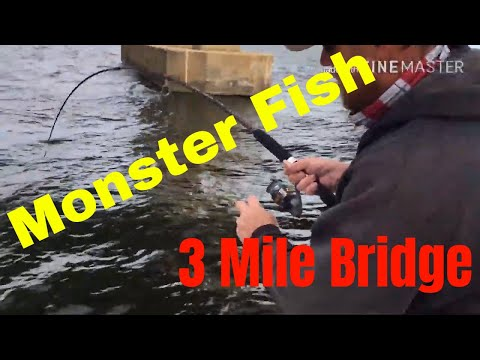 Monster Fish At 3 Mile Bridge (Pensacola Florida)
