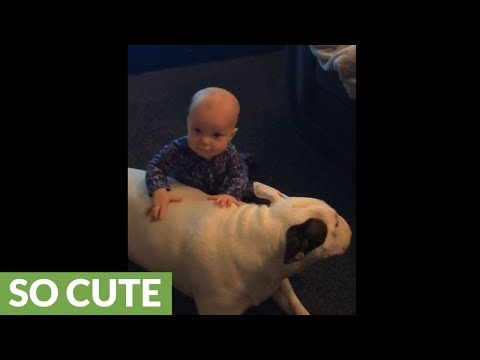 Dog and baby boy share precious moment together