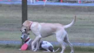 大型犬エリアに小型犬もいましたが・・仲良く遊べた方かな?