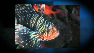 TSG M%C3%BCnchen besucht Diving De Flamenco Beach 360p1