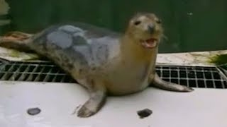 Seals taught to bark theme tune from Star Wars and sing Twinkle Twinkle Little Star
