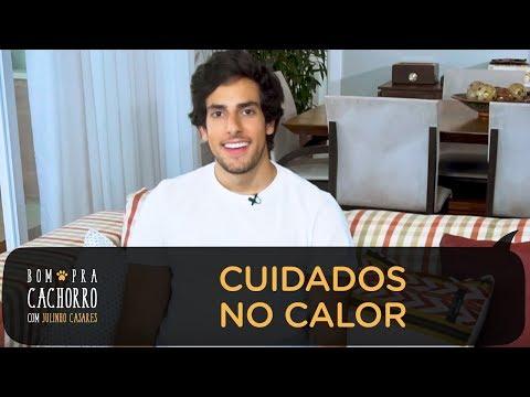 CUIDADOS NO CALOR | BOM PRA CACHORRO